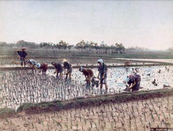 029 Planting Rice