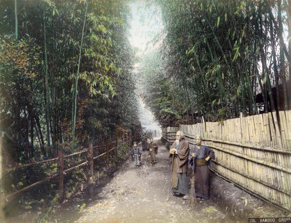 073 Bamboo Grove